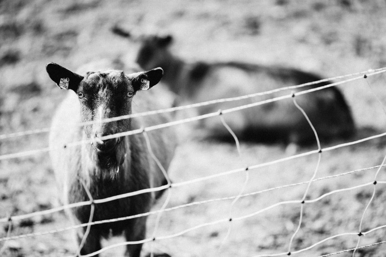 Farm | Martin Moucha photographer